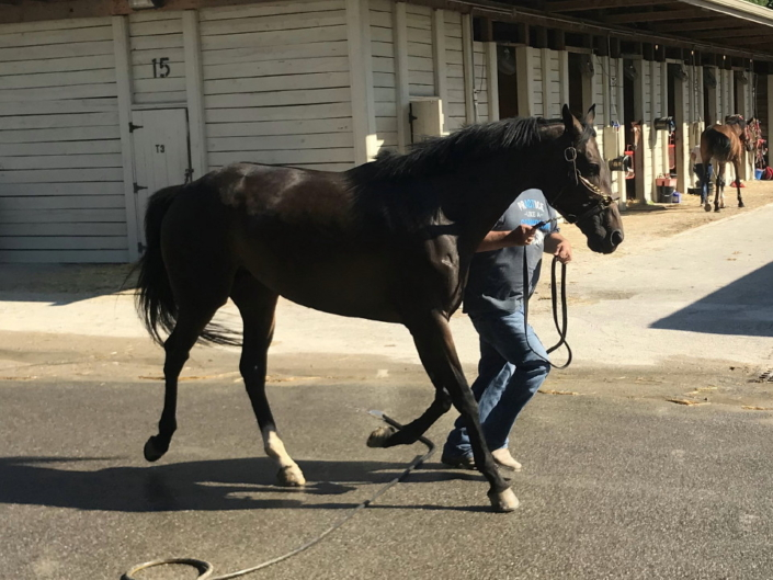 olympic mood thoroughbred for sale 20190626 019
