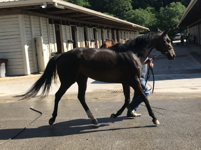 olympic mood thoroughbred for sale 20190626 020