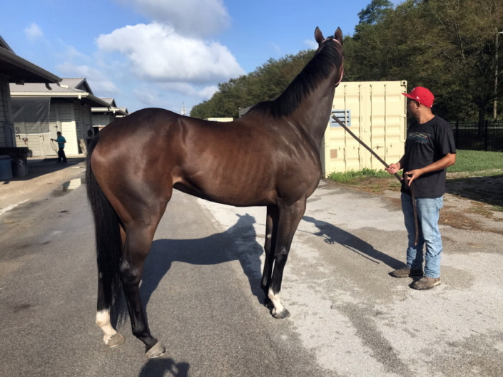 Dudes First Lady Thoroughbred Filly For Sale 1