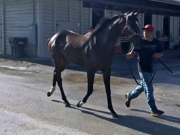 Dudes First Lady Thoroughbred Filly For Sale 13
