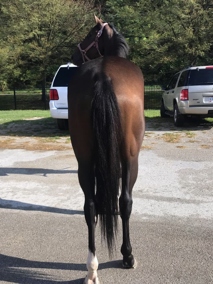 Dudes First Lady Thoroughbred Filly For Sale 3
