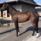 Dudes First Lady Thoroughbred Filly For Sale 9