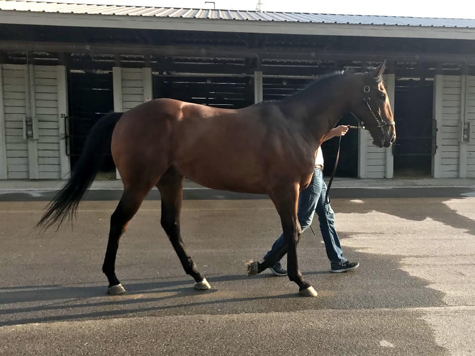 Perfect Comic - 16.3 hh Thoroughbred Horse For Sale - Bits & Bytes Farm