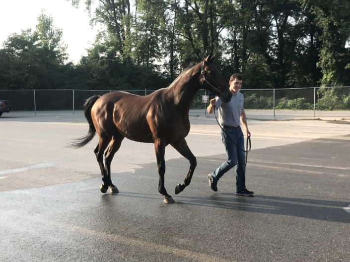 Perfect Comic - Thoroughbred Horse For Sale - bits & Bytes Farm