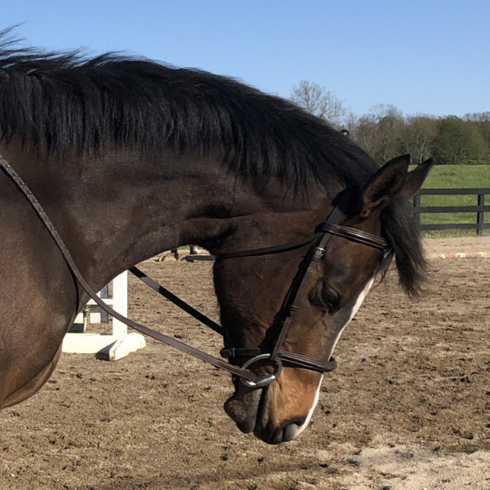 Fred's Baby Doll - Thoroughbred filly for sale