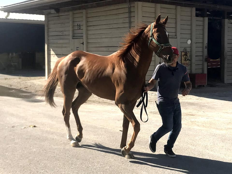 Thoroughbred horse for sale - Bits & Bytes Farm