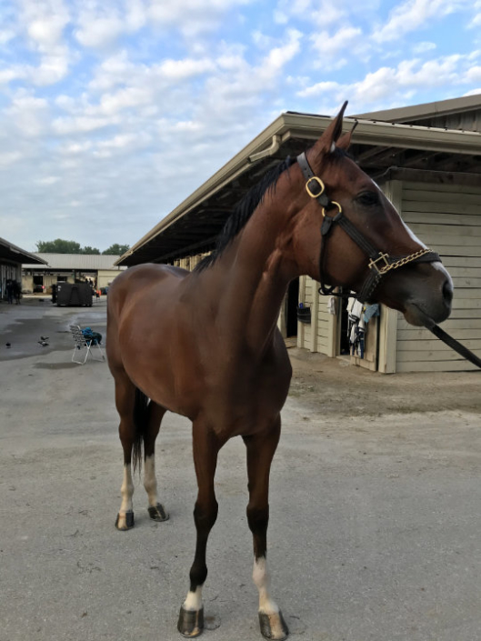 Chief's Victory - Thoroughbred Horse For Sale - Bits & Bytes Farm