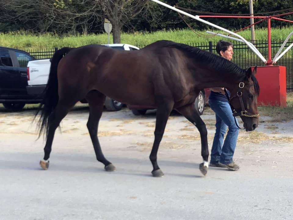 Utandream - Thoroughbred Horse For Sale - Arizona