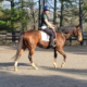 Forrest Cat - Thoroughbred Horse - SOLD!