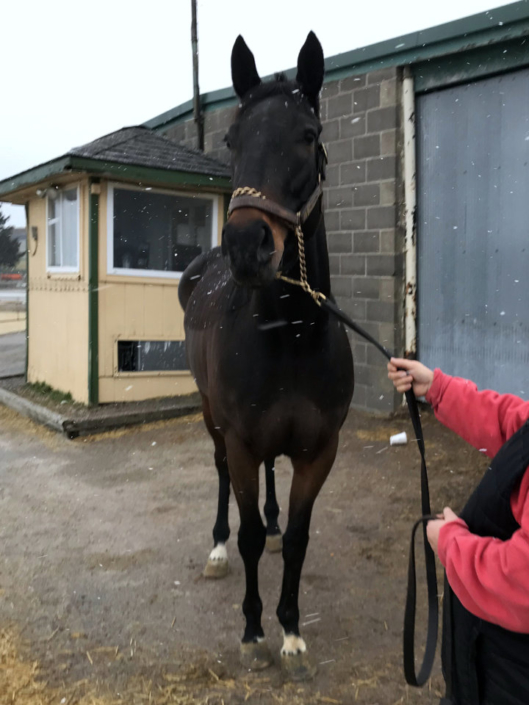 Cause She Can - Black Thoroughbred Mare For Sale