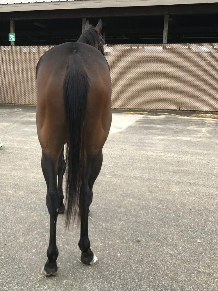 Alvarado - Thoroughbred Gelding For Sale from Bits & Bytes Farm