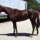 Jillaina - Thoroughbred-horse-for-sale